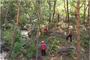 산림청, 수해 대비 숲가꾸기 사업장 중점 관리